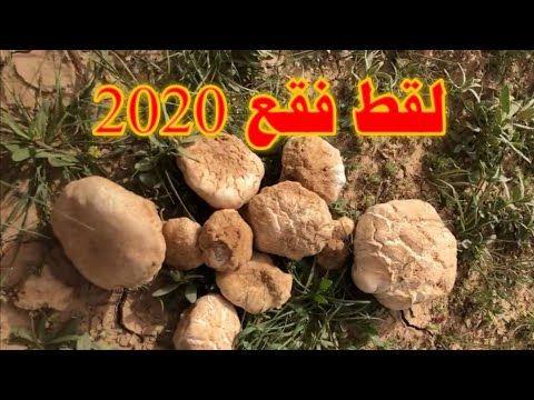 لقط فقع 2020 يناير Youtube Peanut Food