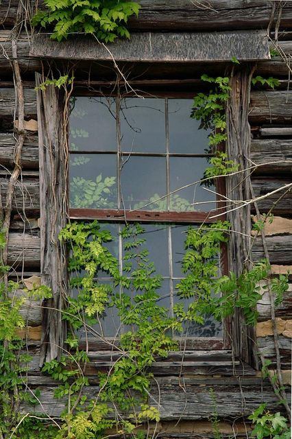 rustic window with vines