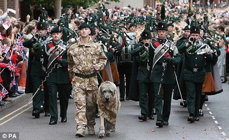 Irish wolfhound Brian Boru VIII trotted ahead as the 1st Battalion - based in Tern Hill, Shropshire - paraded through the streets of nearby Market Drayton with bugles, pipes and drums playing.