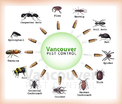Know These 3 Things Before Hiring Professionals For Pest Control In Vancouver And Surrey Vancouver Pest Control Pest Control Services Pest Control Bees And Wasps