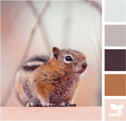 Neutral Palette: Dark Chestnut Brown, Light Gray, Warm Taupe, Rusty Brown and Peachy Cream