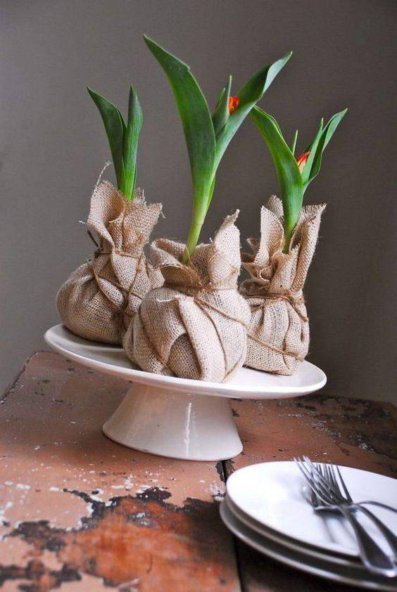 Tulpenknollen in Jutestoff verpackt