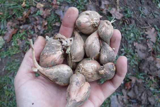 The Seed Ambassadors Project - a wonderful collection of seed saving information