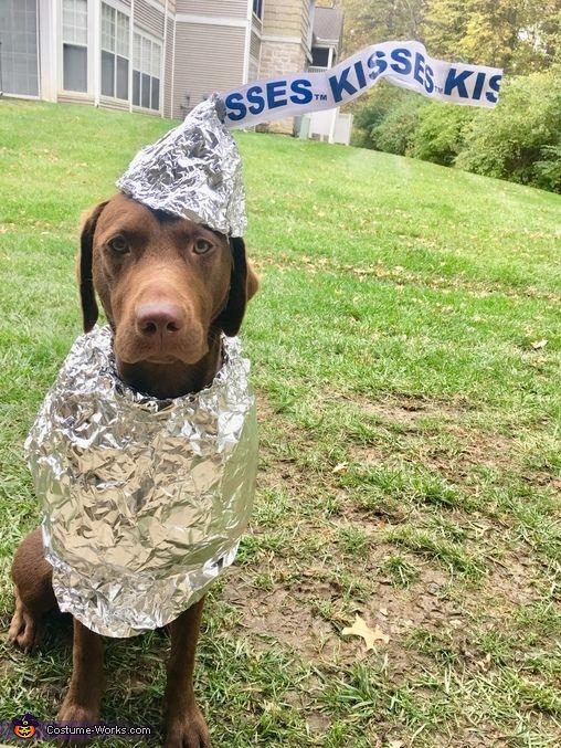Hershey Kiss Halloween Dog Costume