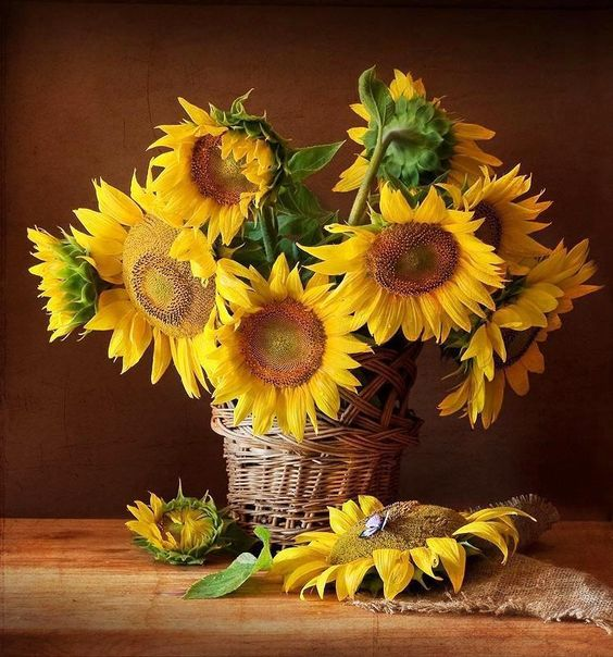 Arranjo Sunflower Pictures Sunflower Art Sunflowers And Daisies