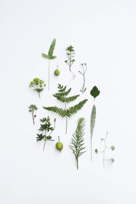 #flowers, repinned by rheingruen.blogspot.de