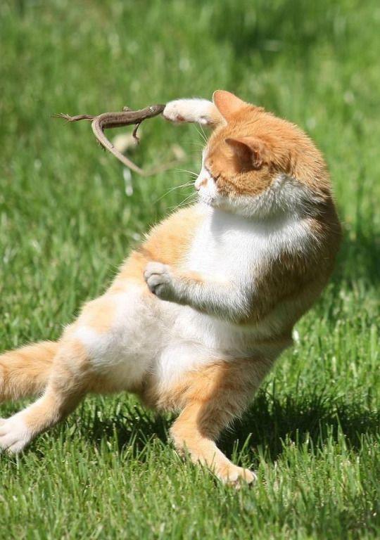 とかげVS野良猫!)