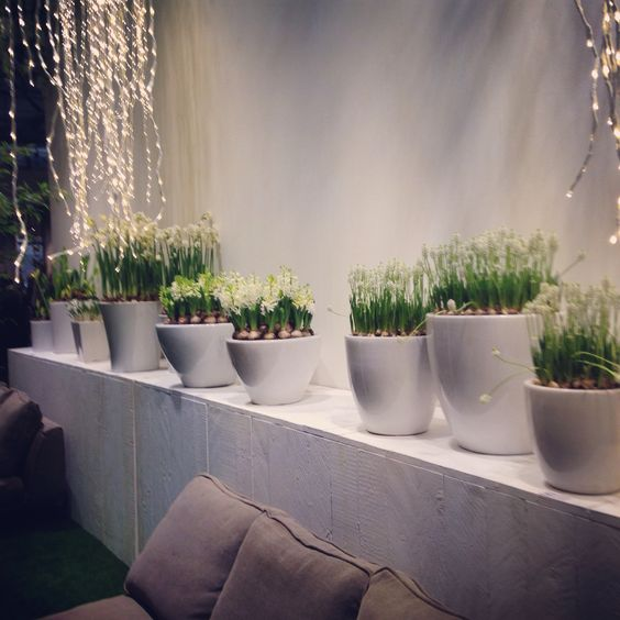 Green plants inside the white pots - Piante verdi all'interno di vasi bianchi.  #ConsiglidiCasa #piante #plants #verdi #green #instahome #relax #home #casa #project