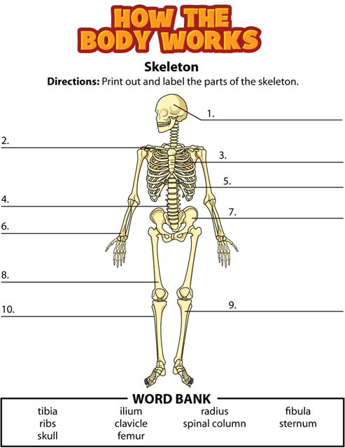Worksheet Works Body Coverings : Kidshealth how the body works bones activity