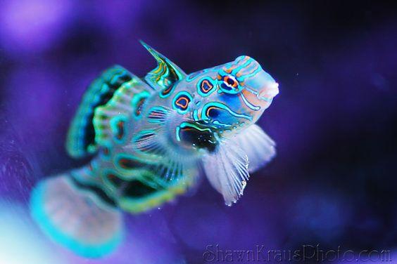 Glow in the dark fish glow in the dark neon pinterest for Glow in the dark fish tank