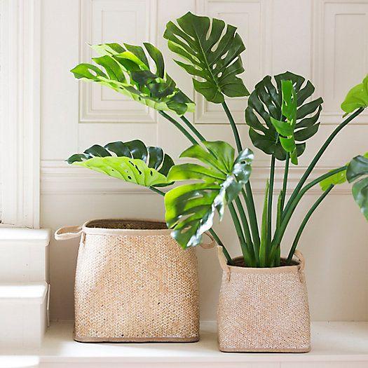 Herringbone Seagrass Basket Plant Decor Indoor Plant Decor Plants