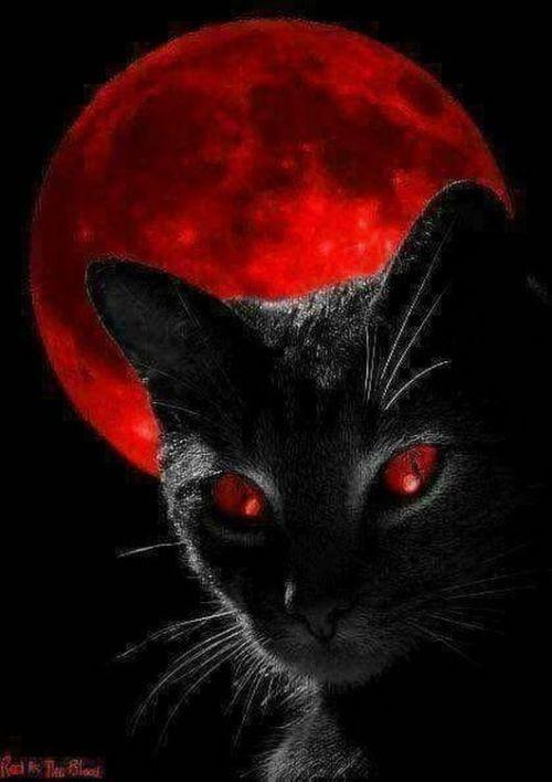 Epingle Par Christine A Sur Boo It S Halloween Art De Chat Noir Illustration De Chat Peinture Chat
