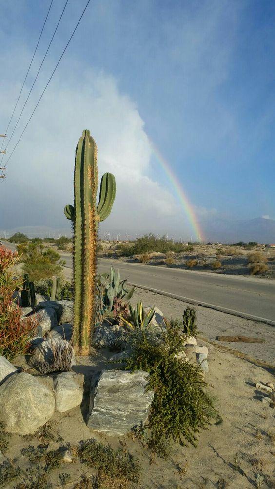 Paisajes... cactus.