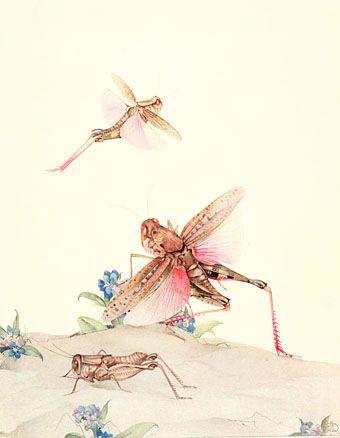 Italian locusts. Edward Julius Detmold