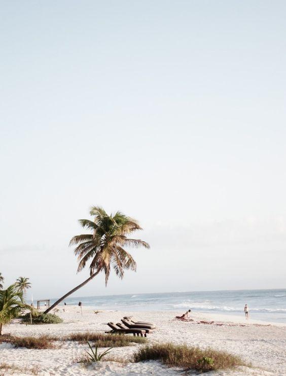 plage de sable blanc mer exotique et palmier sandy. Black Bedroom Furniture Sets. Home Design Ideas