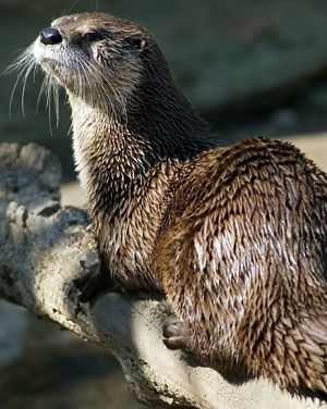 portal to some otter facts