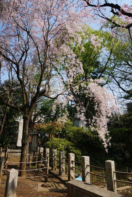 鳩の森神社