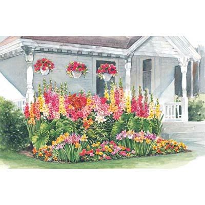 Gardens Bulbs and My house on Pinterest