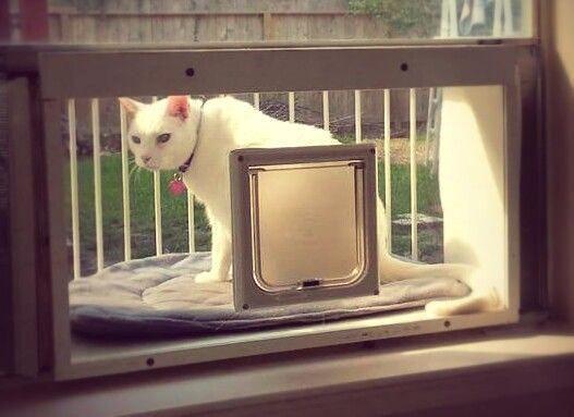 Cat Window Enclosure Cat Solarium The Stylish Open Air Solarium With A Panoramic View A Cat Window Box Enclosure Uk Cat Cat Window Cats Outside Cat Window Bed