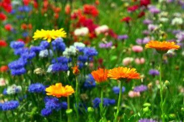 Top 12 Flower-Inspired Baby Names: Summer Flowers, Mixed Flowers, Baby Names, 12 Flower, Flowers Growing, Baby Sweet, Flower Backgrounds, Flower Baby