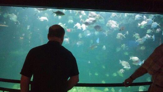 Look at all those fish!