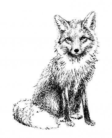 Fox Graphics Drawn In Black Ink Illustration Stock Image Fox Illustration Drawing Engraving Illustration Fox Illustration