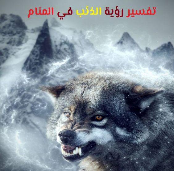 تفسير رؤية الذئب في المنام لابن سيرين ابن شاهين موقع مصري In 2021 Wolf Spirit Animal Dream Art Wolf Pictures