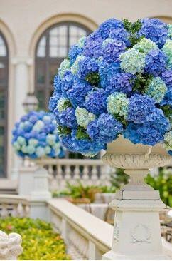 Hydrangeas in fancy platformed planters