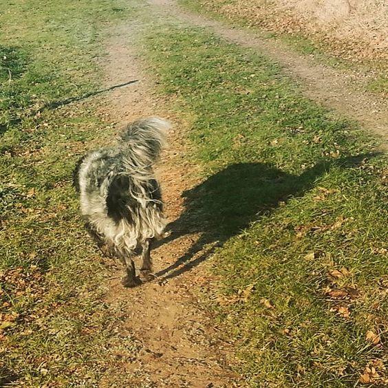 hond en zijn schaduw onafscheidelijk in de winterzon #stabijna