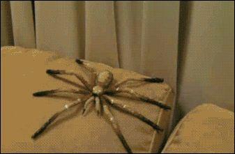 Plushie Spider Scare Tactics