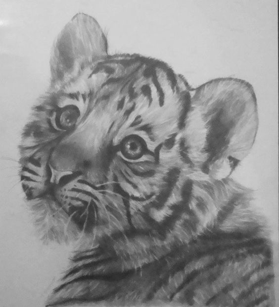 how to draw a realistic tiger face