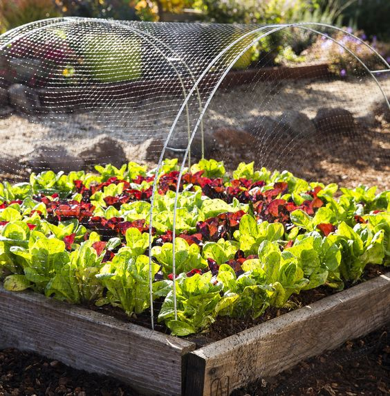 Protect Your Backyard Vegetables From Birds With This Hack
