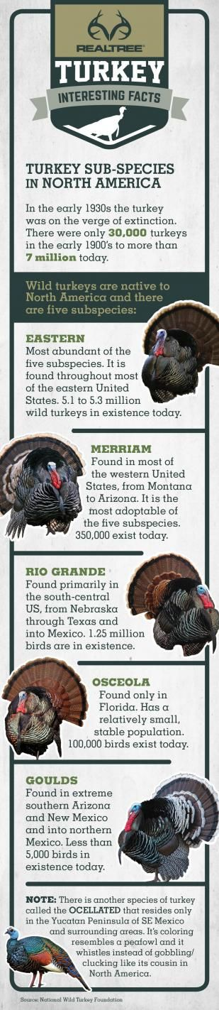 Turkey Sub-species in North America   #Realtreeinforgrphics