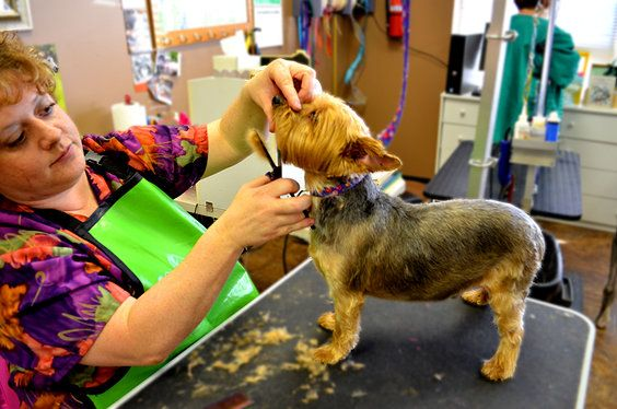 central ohio dog grooming academy - laurie tanner, head, president ...
