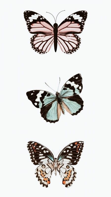 90e5acbc9cd12f89db2aa6dd55010e9c » Butterfly Drawing Aesthetic