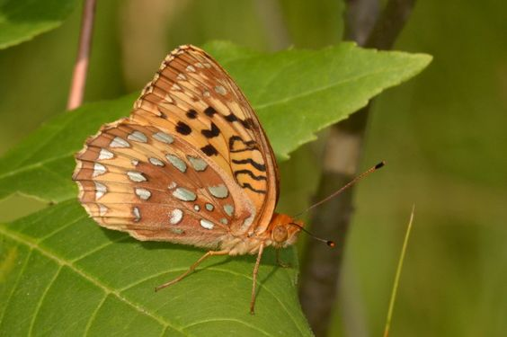 Capture Minnesota Photo Contest - July in Wings by Janelle Streed