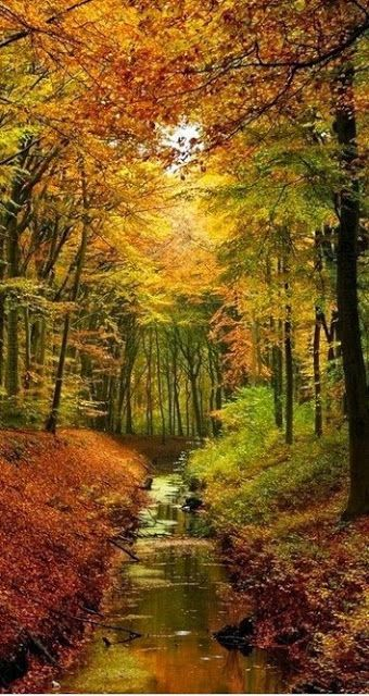 """~Autumn~ """"All the trees change color. The days get very clear . . ."""" ~ George Selden, The Cricket in Times Square"""