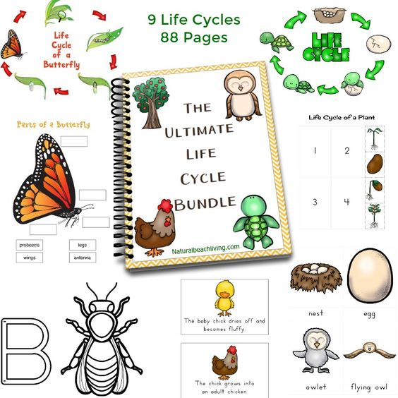 The Ultimate Life Cycle Printables | Visual schedules, Montessori ...