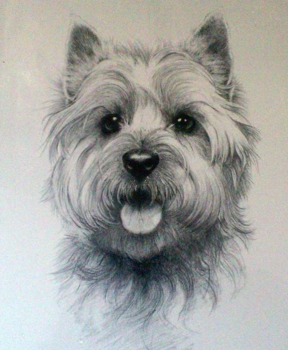 CAIRN RESCUE CHARITY Mounted Sandra Leighton LTD EDITION PRINT Cairn Terrier Dog