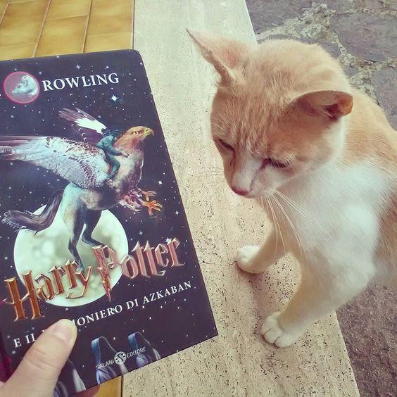 """Oggi grazie  alla #AddictedJuneChallenge di @_addictedlover_  che prevede """"Pet and Book"""" vi presentiamo Ron! Nome non proprio dato a caso così rossiccio ci ha fatto pensare subito a Ron Weasley!! #libri #leggere #gatto #cat  #books #harrypotter #amoleggere #romanzi  #salani #harry #potter #pet #bookstagram #instalibro #instabook #booklover #bookporn #bookworm #bookish #bookaddicted #cute #instapet #instalike #like #instagood #instapic #picoftheday"""