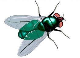 муха картинка для детей - Поиск в Google