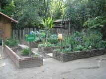 Resultado de imagem para ideias de canteiro de horta