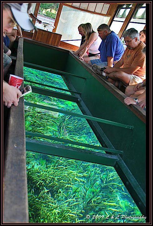 Ocala Central Florida Photography The Glass Bottom Ocala Florida Florida Photography Visit Florida