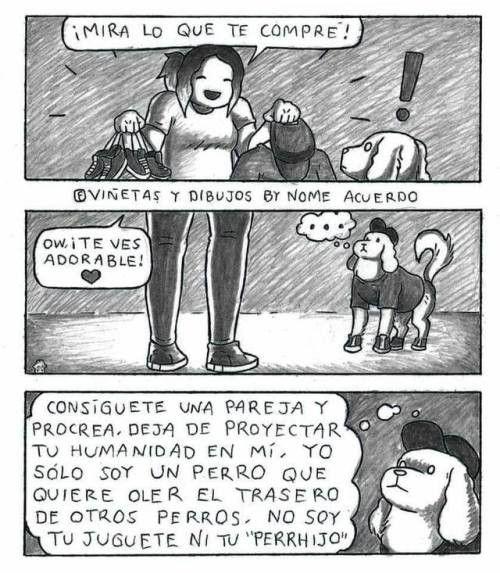 Los Perros Estan Cansados Del Postureo De Sus Duenos Memes Dog Lovers Disney Cartoons