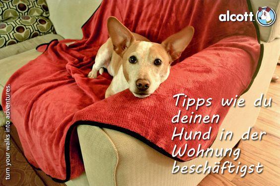 Die besten Tipps, um deinen Hund in der Wohnung zu beschäftigen