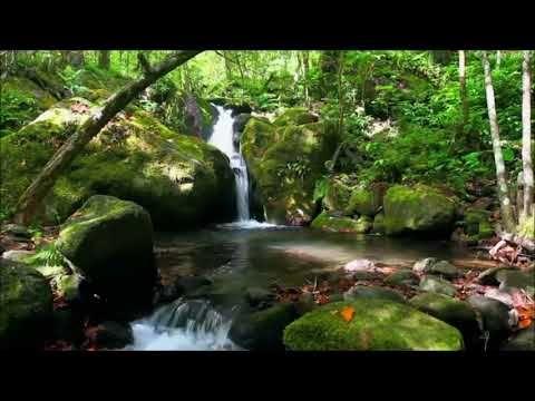 موسيقى هادئة جدا تاخذك الى عالم ثاني مع منظر طبيعي خلاب Hd Nature Sounds Youtube Meditation Books