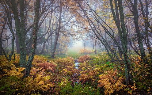 Forest Magical Colors In Autumn Trondheim Norway Landscape Nature