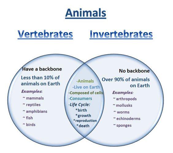 vertebrates and invertebrates worksheets pdf