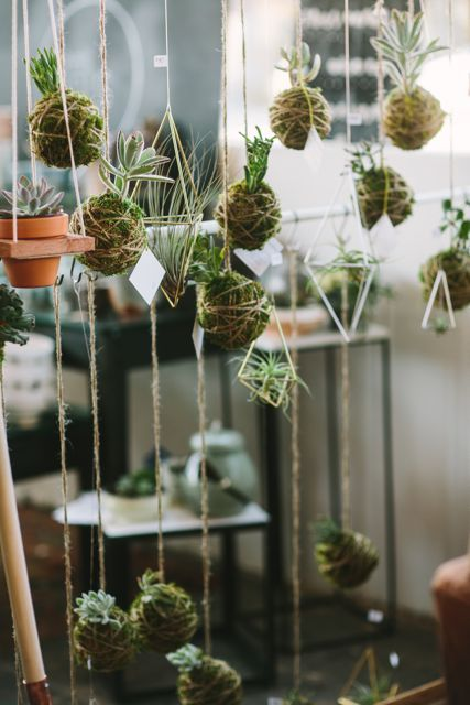 Hanging plants by Kelso Deosn't Dance.