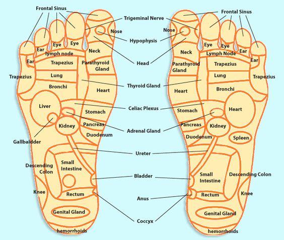 Foot Massage Pressure Points | REFELXOLOGY TRIVIA|FOOT REFLEXOLOGY IN HAWAII. OASIS SPA